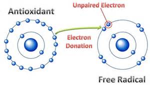 free radicals kill our cells